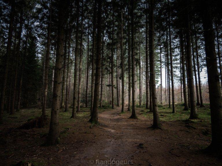 Le bois de Preuss et les trois bornes de Vaalserberg