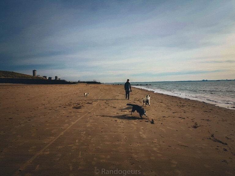 Un week-end en Zélande avec nos trois chiens